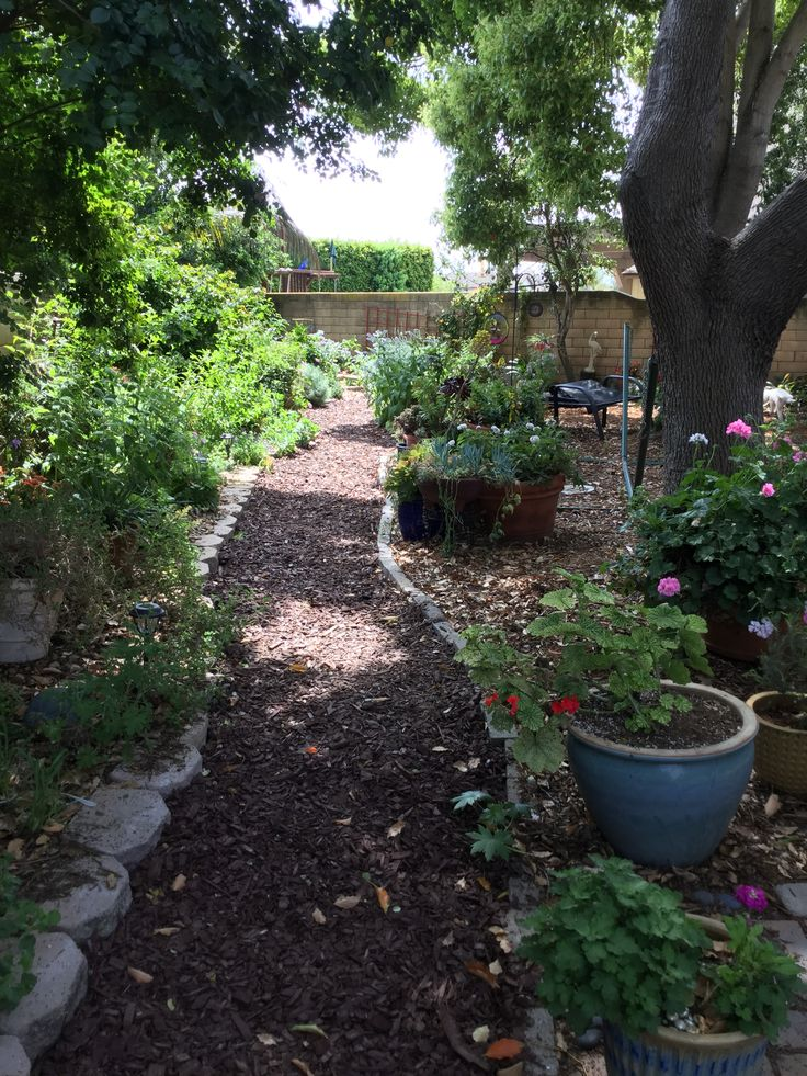 Best 25+ No grass backyard ideas on Pinterest | Shady ... on Backyard Ideas No Grass  id=95069