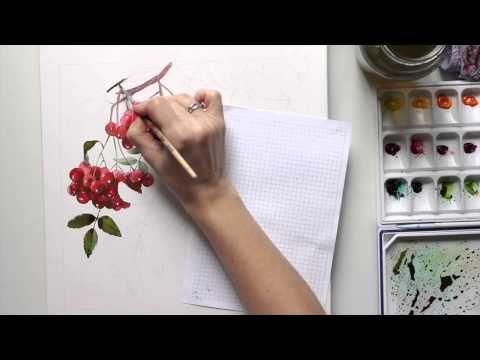 Акварель   Рябина. (Watercolor   Rowanberry) - YouTube
