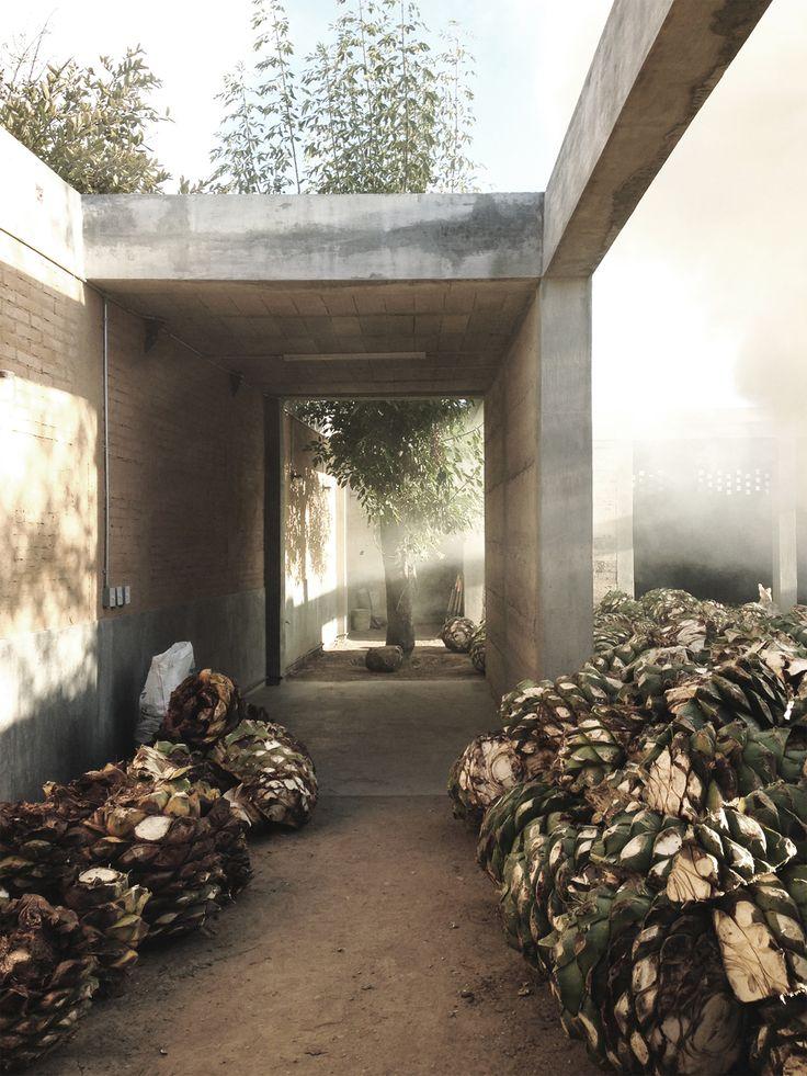 AMBROSI | ETCHEGARAY, IPM Mezcal House | photo by Omar Vergara