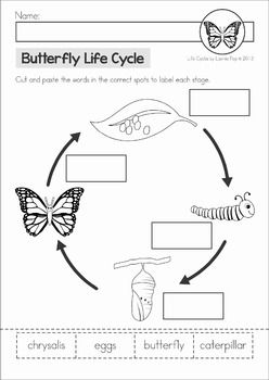 Butterfly Life Cycle cut and paste unit. A page from the unit: cut and paste the words to label each stage