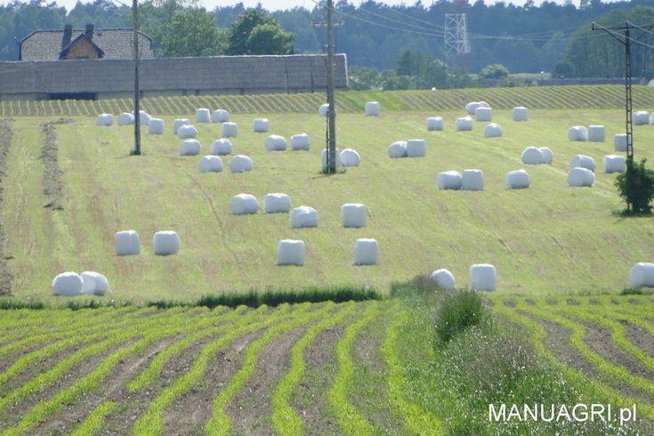 Białe bele sianokiszonki na polu - http://wp.me/p6aAA2-eV