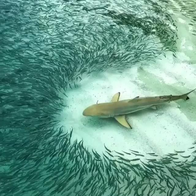 Be A Shark Don T Let Small Fish Hold You Down Underwater Graphy Life Under The Sea Underwater Ocean Creatures