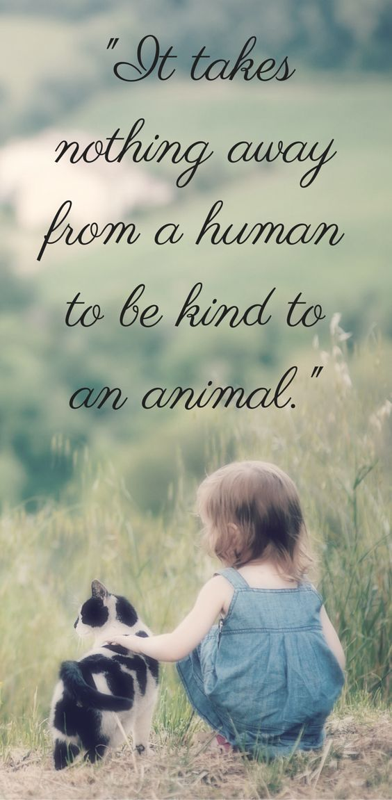 It takes nothing from a human to be kind to an animal.