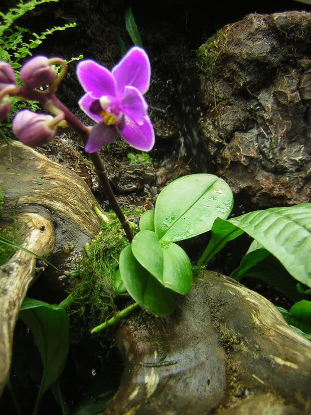 Cultivar orquídeas 2