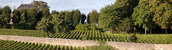 Vins de Chorey Lès Beaune - Lavinia