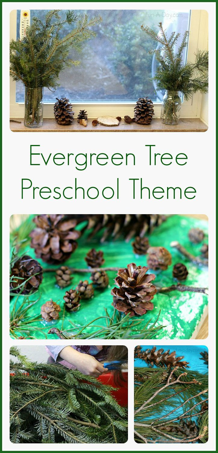 Preschool winter activities that are perfect for an evergreen tree theme!