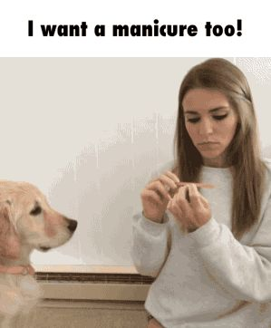 Dog Wants a Manicure too | Funny Pictures, Quotes, Pics, Photos, Images