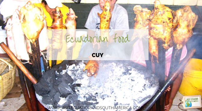Would you like to taste a very special dish from the Andes cordillera? Add cuy to your list of food to eat.  Plan your trip! Get the Ebook: Must-See and Eat- Ecuador and Its Galápagos Islands which brings insightful tips and inspiration for the food and attractions that create memorable experiences to visitors from all over the world.   Order the ebook -> http://bit.ly/BPEbookMustinEC  (10% of the proceeds go to the Manabi Earthquake relief)  Read the blogpost with reasons to visit Manabi…