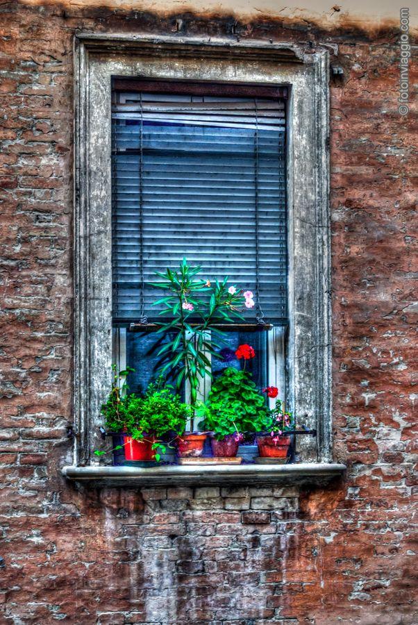 Finestra fiorita HDR - #Urbino - #Marche - #Italia