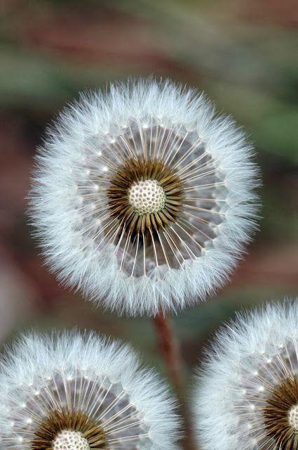 Beautiful Flower White