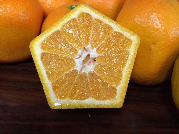 Japanese Five-Sided Oranges Look Weird, Taste Great, Won't Roll Off The Table  ... see more at InventorSpot.com