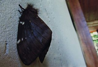 Lepidoptera | Flickr - Photo Sharing!