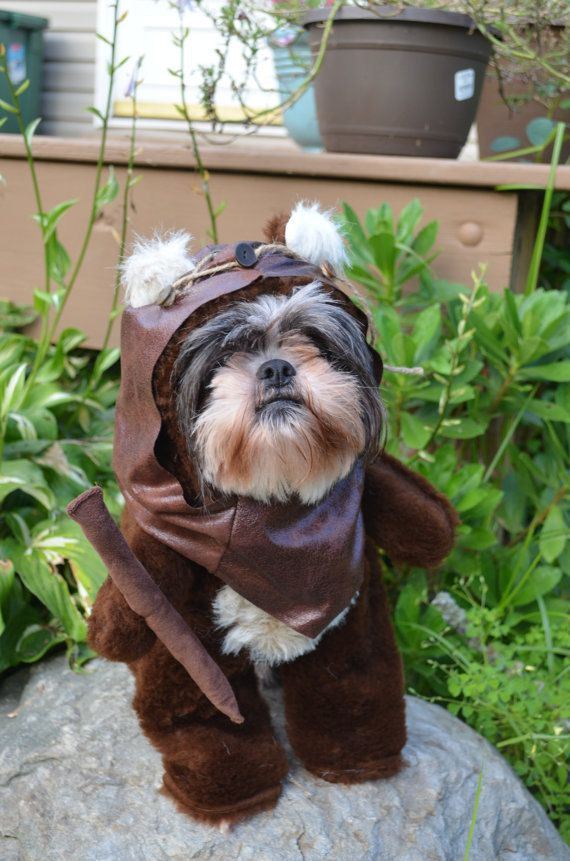 Adorable Furry Reddish Brown Dog Halloween by sewdoggonecreative