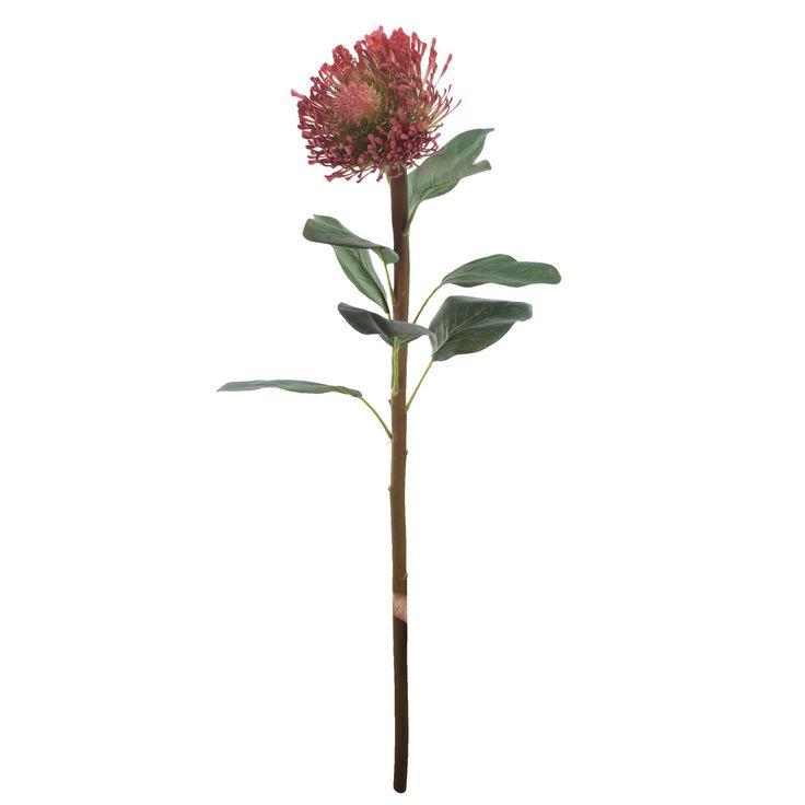 Pincushion Protea Stem