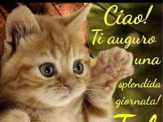 buongiorno ti auguro una splendida giornata tvb gatto