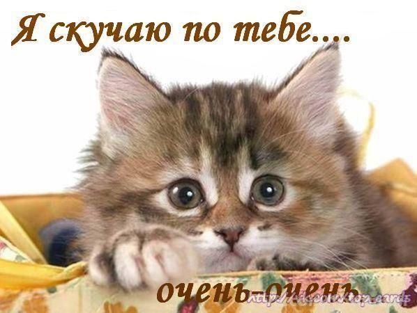 Картинки с котятами я скучаю