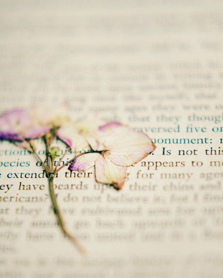 Dried flower book photographwhite girly wall art by dullbluelight