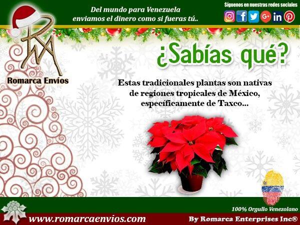 La Flor de Nochebuena, Estas tradicionales plantas son nativas de regiones tropicales de México, específicamente de Taxco, Guerrero. Su uso como planta decorativa en la temporada navideña, se debe a que florecen en invierno. Los prehispánicos la llamaban, en náhuatl, Cuetlaxóchitl, que se deriva de la unión de las palabras, Cuetlaxtli que significa cuero y xochitl, que significa flor.