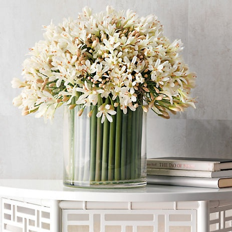 White Agapanthus flowers are available for Scottish weddings in August. Contact The Stockbridge Flower Company for more details.