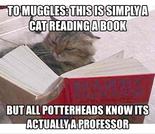 Simply a cat reading a book, because that is normal to most muggles. Professor McGonagall!!
