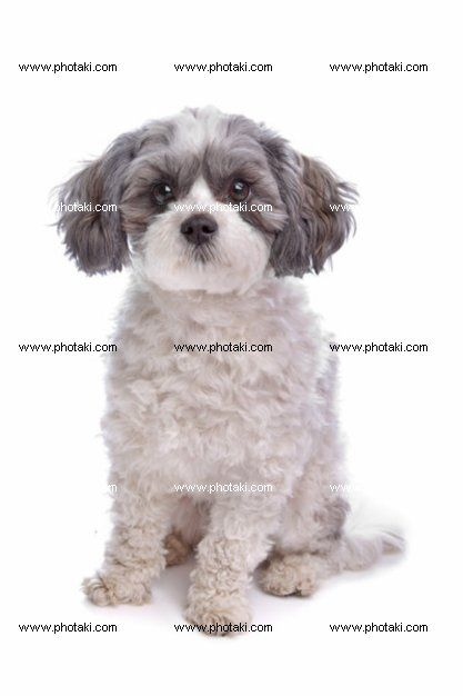 http://www.photaki.com/picture-mixed-breed-dog_1304410.htm