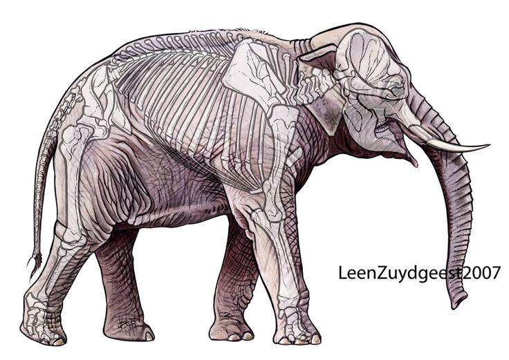 26 best elephants images on Pinterest | Elephant art ...