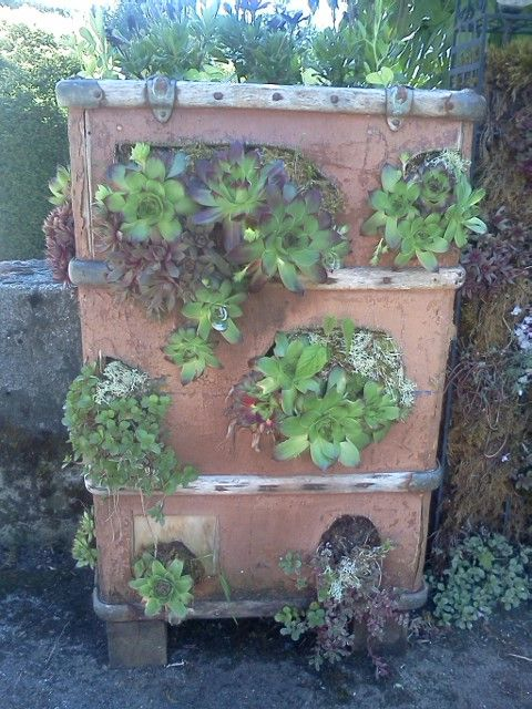 its an old suitcase I filled with hens and chicks