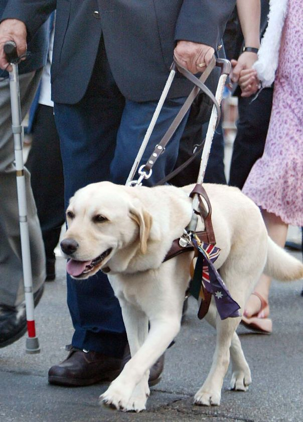 Seeing eye dog alerts the police her owner was being attacked by an intruder. Good story.