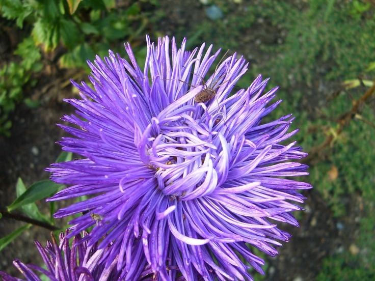 A nice little spider on beautiful a flower