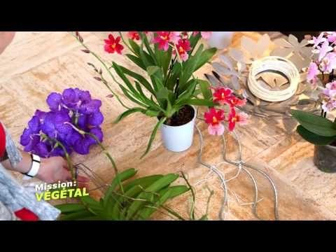 """Emission """"Mission Végétale""""- M6 - 23/11/2016 - Orchidées Vacherot Lecoufle"""