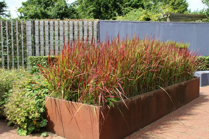 Cortenstaal i a collection of ideas to try about other for Ornamental grass bed