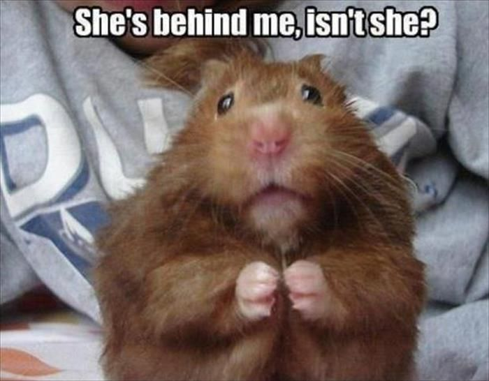 Funny Animal Pictures Of The Day – 35 Pics