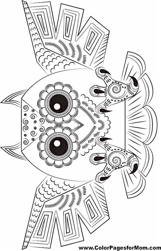 owl coloring page 15