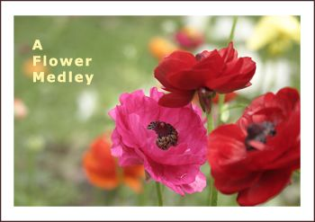 Give a beautiful bound Photo Book - A FLOWER MEDLEY - Support the lasting gift of a movie or book by adding these sensory gifts to support engagement and reminiscence for a person in care. Judi Parkinson Activities  http://sharetimepictures.com.au/GIFTS.php