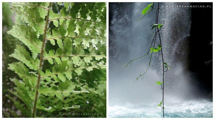 Moje lasy deszczowe – jak zatrzymać się w pogoni życia
