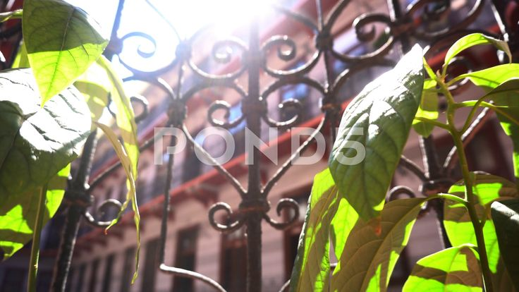 Apartment house plant - Stock Footage   by botiordog