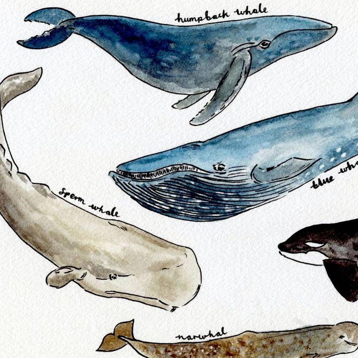 deep sea whales art print by rebecca mcmillan illustration ...