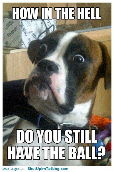 This dog's eyes!! shutupimtalking.com -> so good.