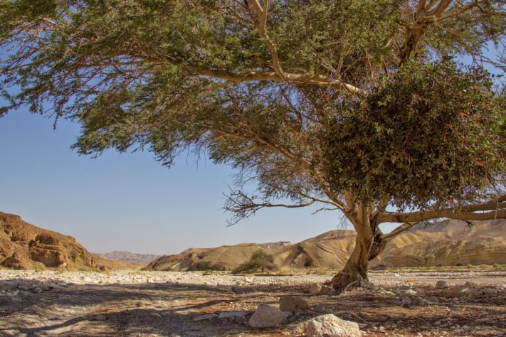 3 Days on the Israel National Trail: from Be'er Ora to Eilat | Hike – Photo – Israel