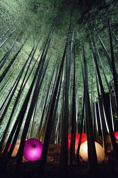 京都 嵯峨 竹林の小径 Light up at bamboo forest in Kyoto, Japan