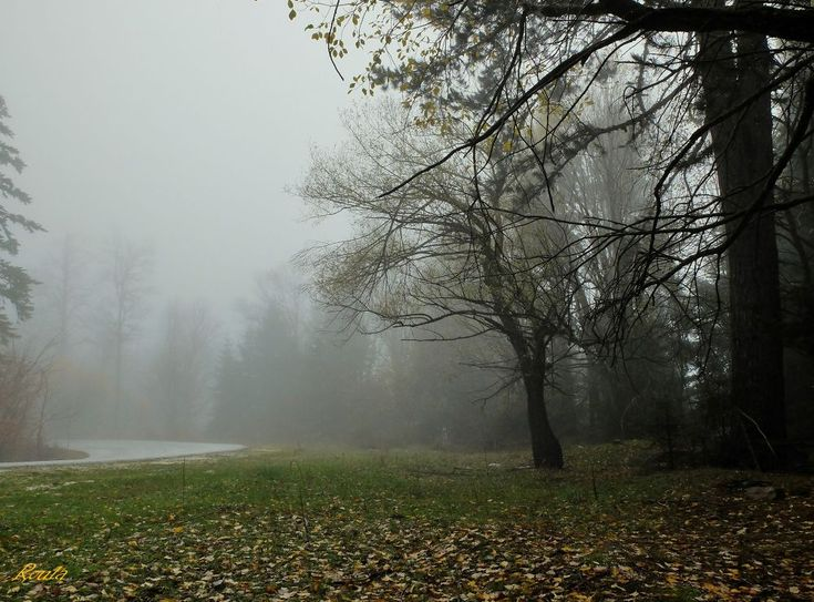 Misty forest.... by Roula Lekka