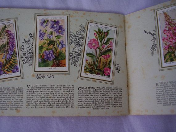 WD & HO Wills Cigarette Card Wild Flowers by Vintage0Sparklers