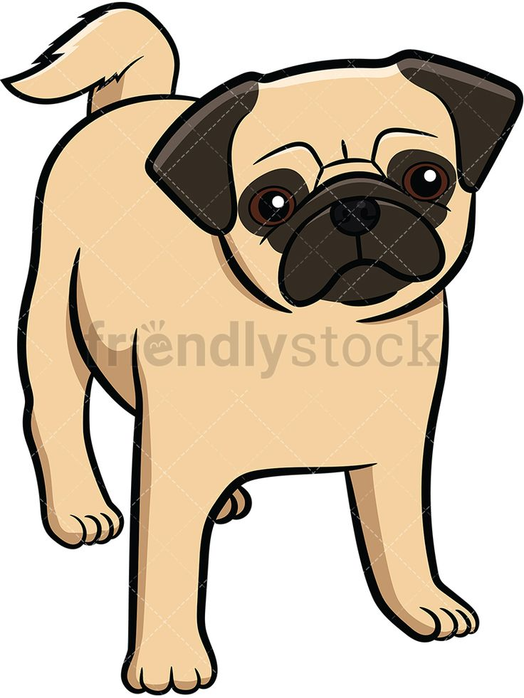 Pug Puppy Staring: Royalty-free stock vector illustration of an apricot pug pup with a curly tail standing on all fours and slightly tilting its head.  #friendlystock #clipart #cartoon #vector #stockimage #art #pug #cute #mastiff #chinese #dutch #puppy