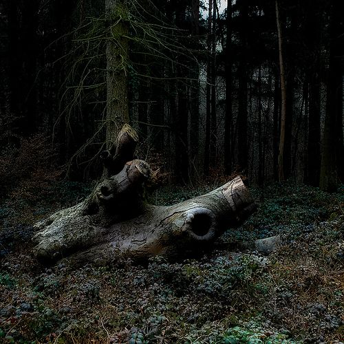 Fallen by Alexander Boden