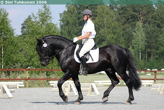 Finnhorse stallion Veksaus. Looks like a black but can't be one. Both its sire and dam are chestnuts. Veksaus has also sired 11 foals and all of them are chestnuts (dams are chestnuts, except one which is bay). If Veksaus was black, at least 50% of its foals out of chestnut mares would be blacks or bays.