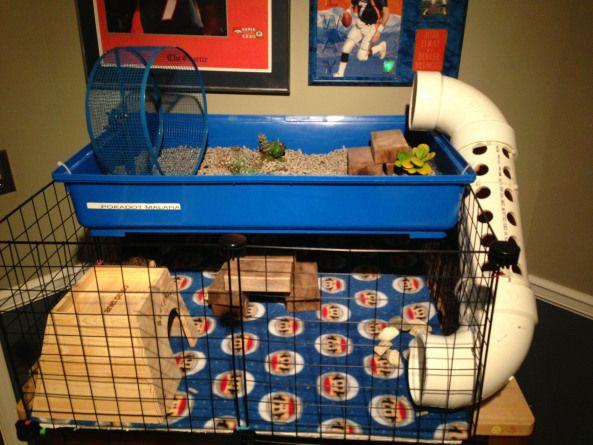 Awesome Hedgehog House Rabbithouses Hedgehog House Hedgehog Cage Hedgehog Care