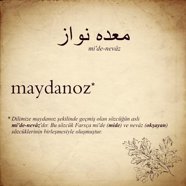 #farsça #maydanoz #mide #nevaz #kelimeler #izmir #iran #farsdiliveedebiyatı #turkdiliveedebiyati #neredengelir