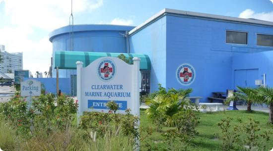Clearwater Marine Aquarium.  Our next trip to Tampa will include this place!