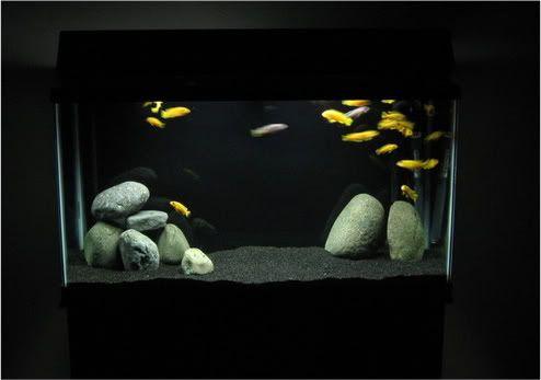 Black sand aquarium freshwater google search aquarium for Sand for fish tank