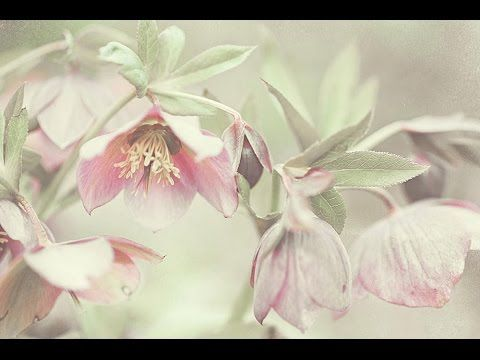 Shabby Chic Collection for Home Decor. Jenny Rainbow Fine Art Photography